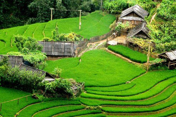 Riziere Vietnam Sapa