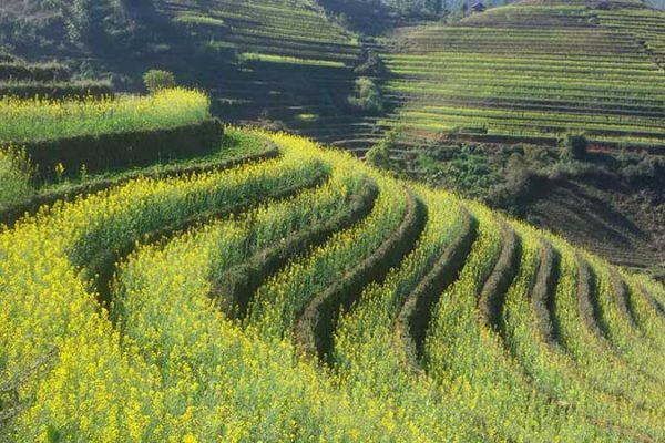 Rizieres en terrasse Vietnam Sapa