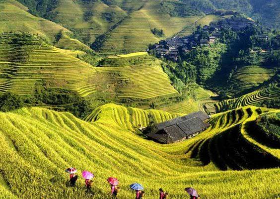 Rizieres Vietnam Sapa