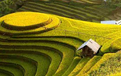 Riziere en terrasse vietnam